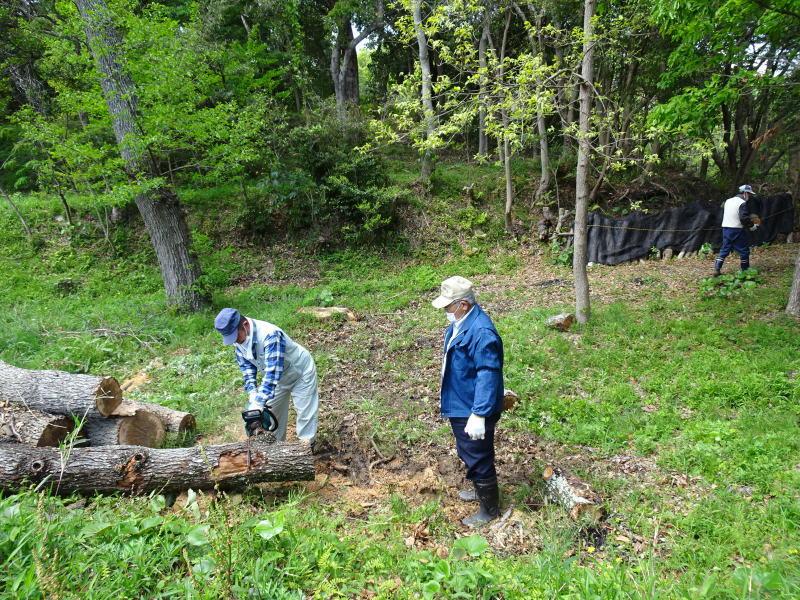伐採木玉切りと薪置き場整理・・・自由活動日_c0108460_14474337.jpg