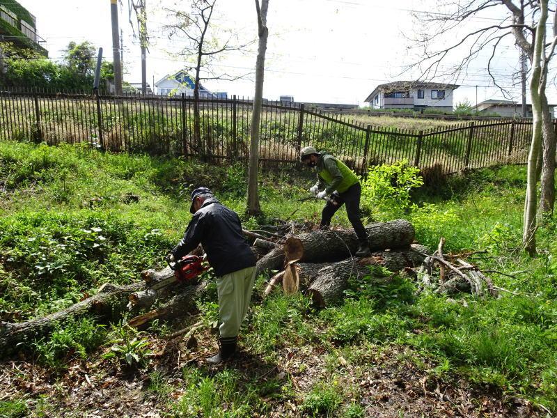 伐採木玉切りと薪置き場整理・・・自由活動日_c0108460_14505185.jpg