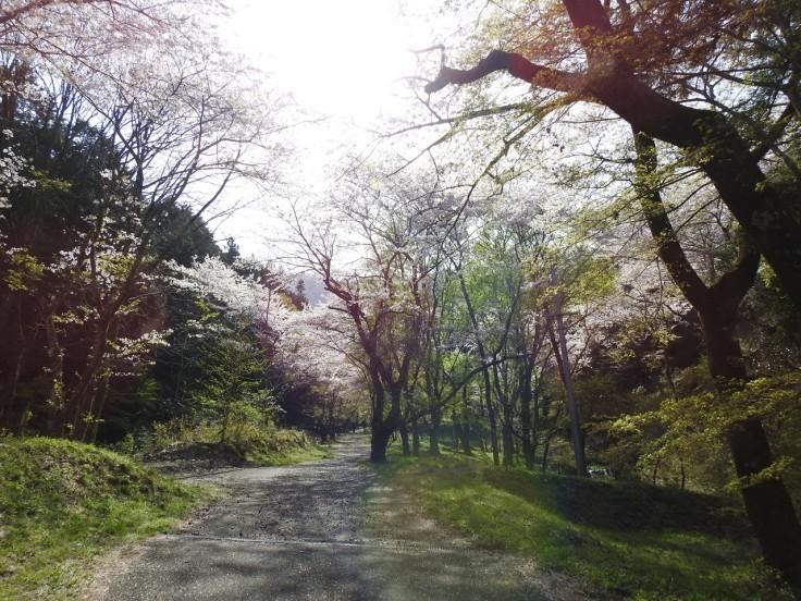 『霞間ヶ渓(かまがたに)の風景』_d0054276_20012177.jpg