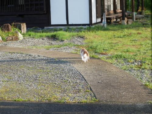 なっちゃんの朝散歩とパセリの冷凍保存_f0054677_08251935.jpeg