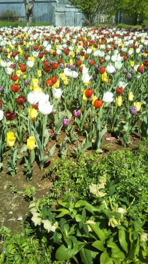 ハーブ庭園 _f0076001_22165677.jpg