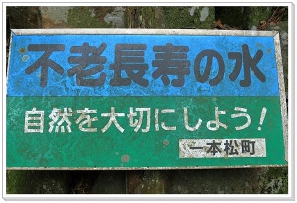 山笑う_a0057905_16185183.jpg