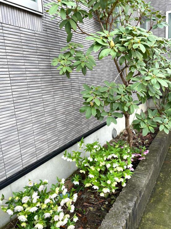 庭の花たちと4月誕生会_f0067514_10151654.jpg