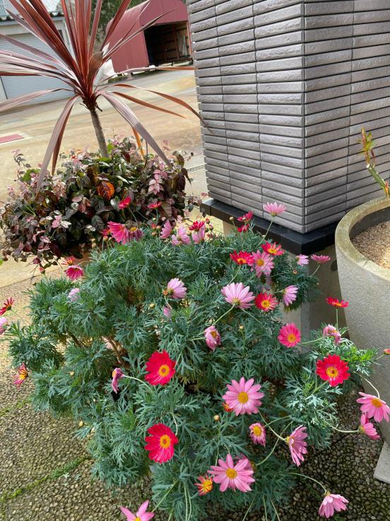 庭の花たちと4月誕生会_f0067514_10183805.jpg
