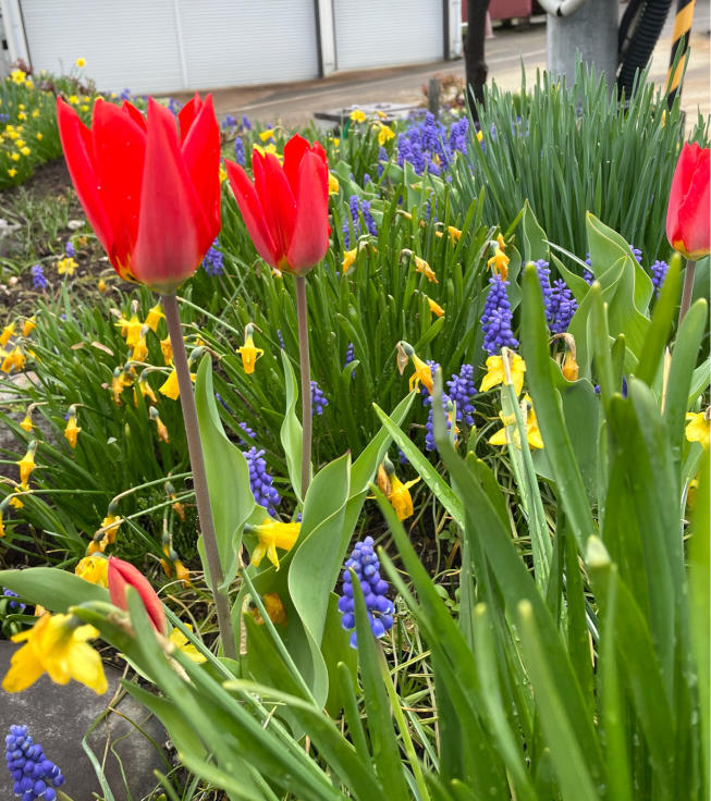 庭の花たちと4月誕生会_f0067514_10240748.jpg