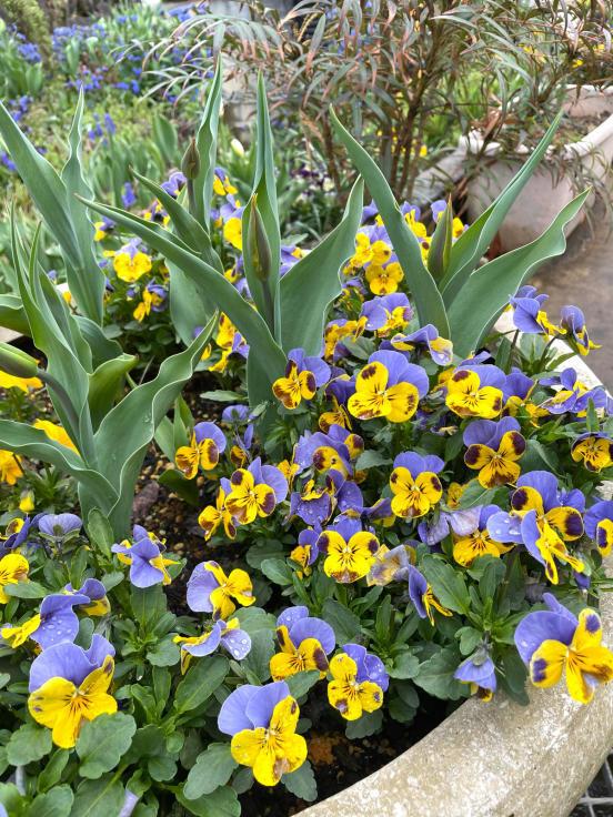 庭の花たちと4月誕生会_f0067514_10240815.jpg