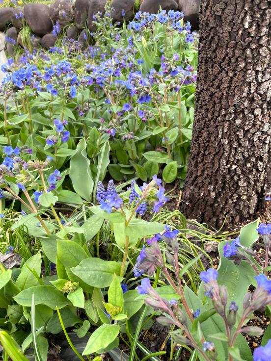 庭の花たちと4月誕生会_f0067514_10241013.jpg