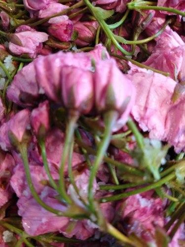 桜湯を作る_a0173527_11221047.jpg