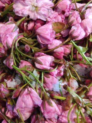 桜湯を作る_a0173527_11222542.jpg
