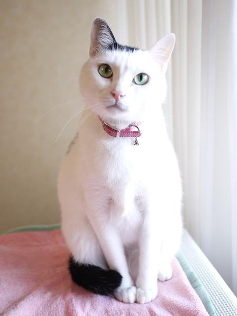 猫のお留守番 たらくん編。_a0143140_21032139.jpg