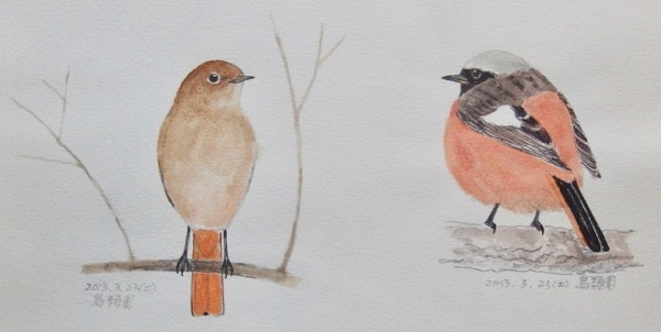 #ネイチャー・スケッチ #Naturejournal #sketch #Watercolor #水彩画 #野鳥_a0083553_13090263.jpg