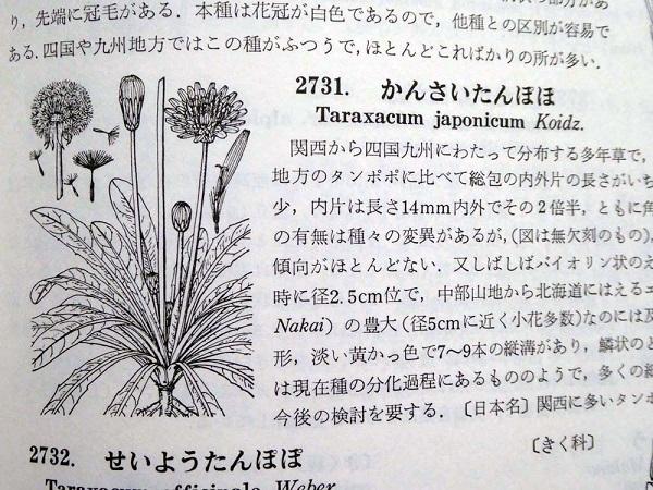 タンポポの日本在来種            No.2093_d0103457_23205107.jpg
