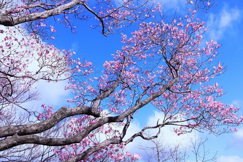 古祖母山 4月18日_e0405576_21245021.jpg