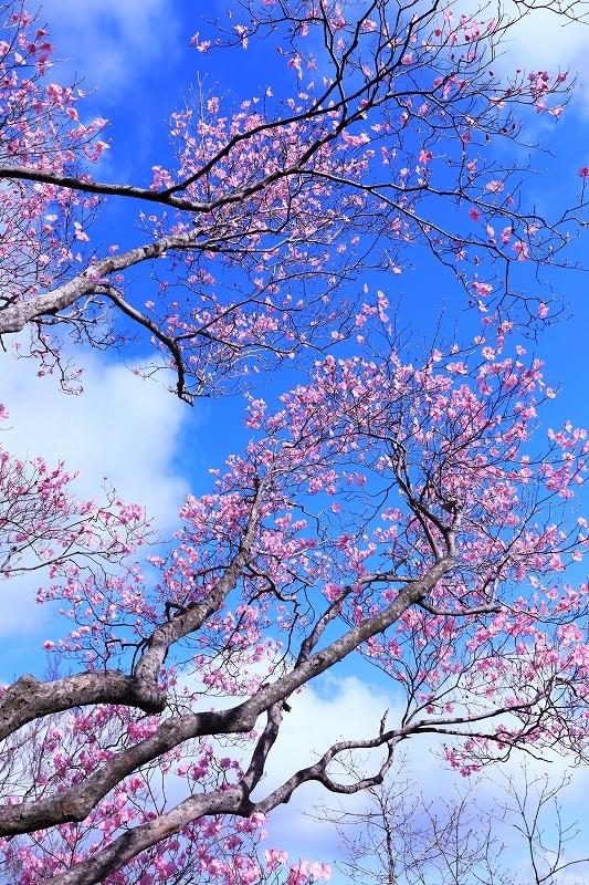 古祖母山 4月18日_e0405576_21245911.jpg