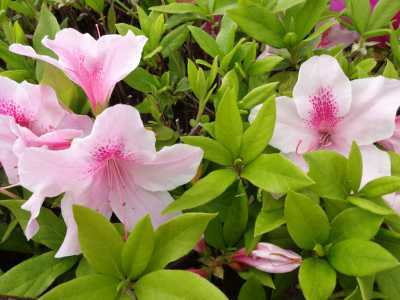 富浜緑地・中川口緑地で見られる花の紹介_d0338682_12415350.jpg