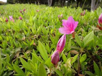 富浜緑地・中川口緑地で見られる花の紹介_d0338682_12432135.jpg