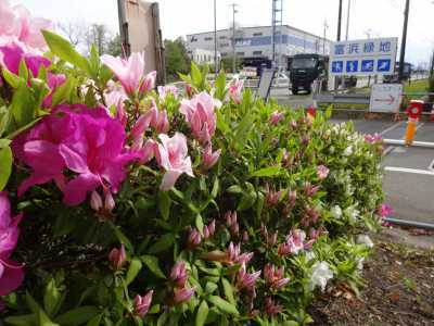 富浜緑地・中川口緑地で見られる花の紹介_d0338682_12433359.jpg