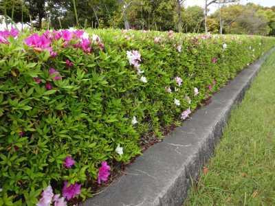 富浜緑地・中川口緑地で見られる花の紹介_d0338682_12435279.jpg