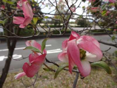 富浜緑地・中川口緑地で見られる花の紹介_d0338682_12442715.jpg