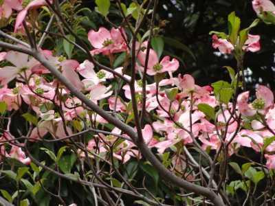富浜緑地・中川口緑地で見られる花の紹介_d0338682_12475867.jpg