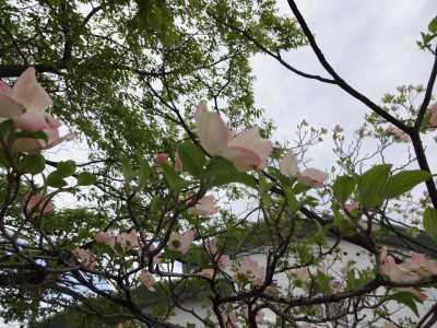 富浜緑地・中川口緑地で見られる花の紹介_d0338682_12490194.jpg