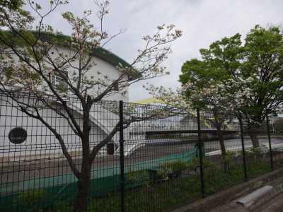 富浜緑地・中川口緑地で見られる花の紹介_d0338682_12492841.jpg