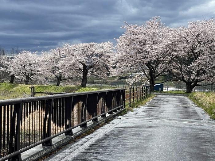 春を感じに_d0077992_13105210.jpg