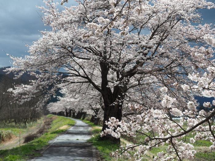 春を感じに_d0077992_13110576.jpg