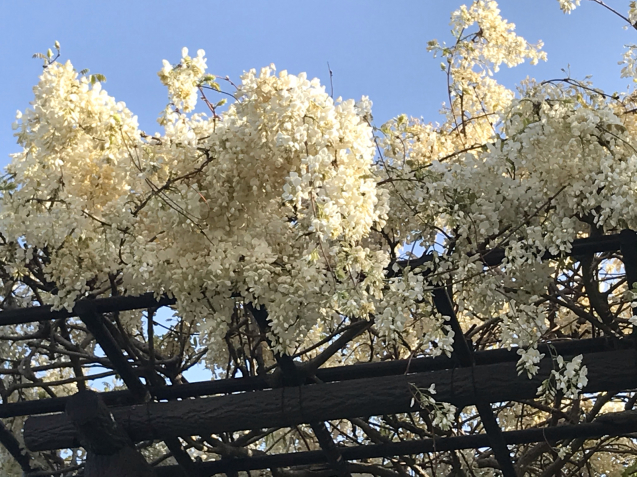 風薫る5月 / yoshi_d0135801_20345090.jpg