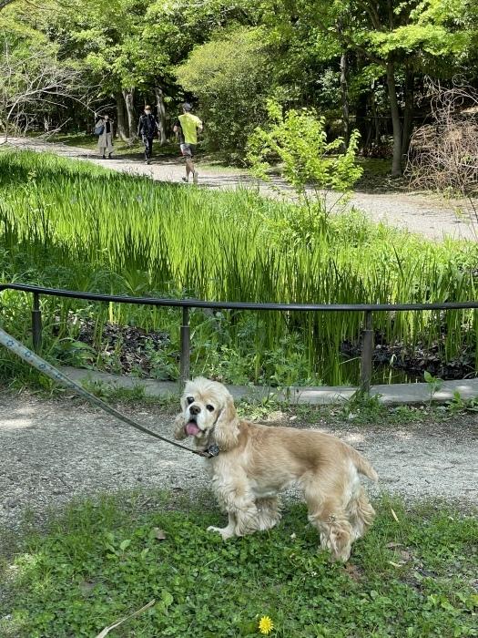 公園歩きさん_b0067012_22535407.jpeg