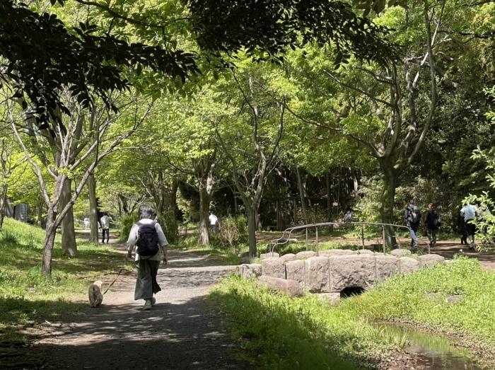 公園歩きさん_b0067012_23022721.jpeg