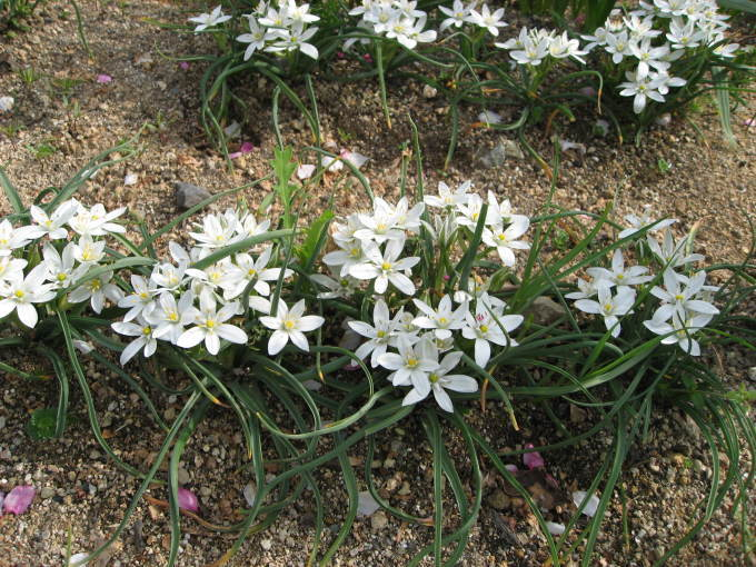 花だより(サン・ビレッジ夢前)_a0253834_10361615.jpg