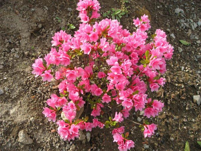 花だより(サン・ビレッジ夢前)_a0253834_10363268.jpg
