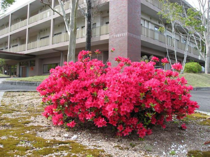 花だより(サン・ビレッジ夢前)_a0253834_10365170.jpg