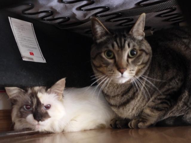 猫のお留守番 ソルくんステラちゃん編。_a0143140_21222149.jpg