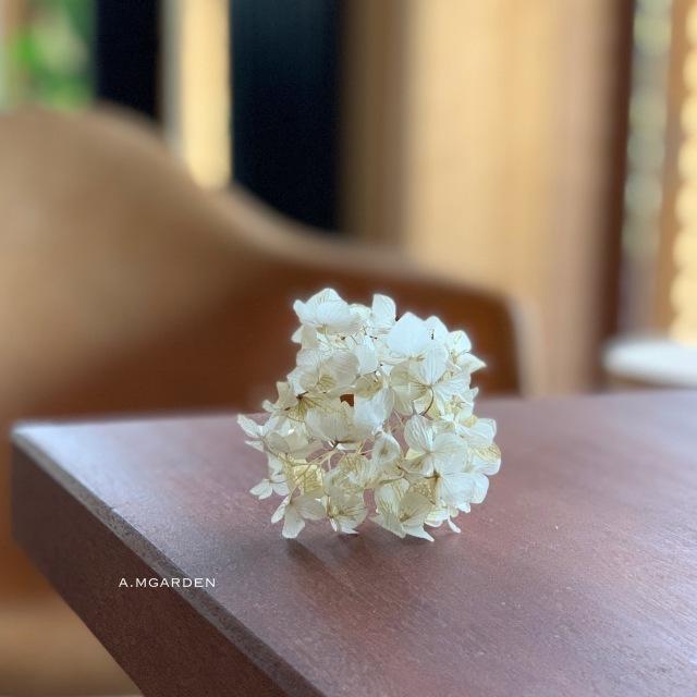 White dry 紫陽花。_b0125443_11074861.jpeg