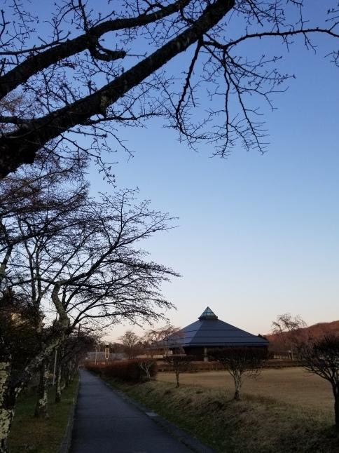 軽井沢の桜・2021 * プリンス通りの紅枝垂れ桜が満開 ~ 矢ヶ崎公園はもう少し♪_f0236260_22354378.jpg