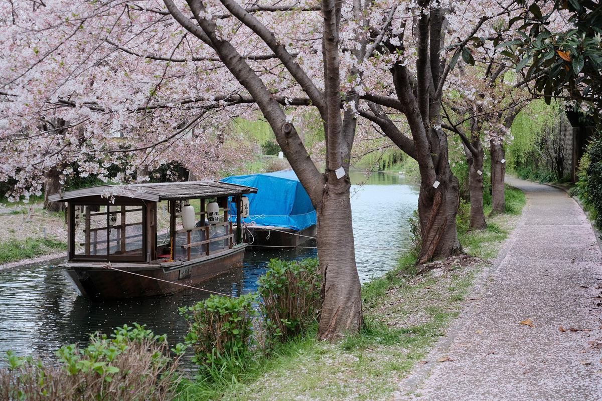京都 桜 2021_f0021869_22091426.jpg