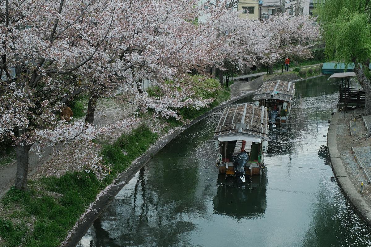京都 桜 2021_f0021869_22102582.jpg