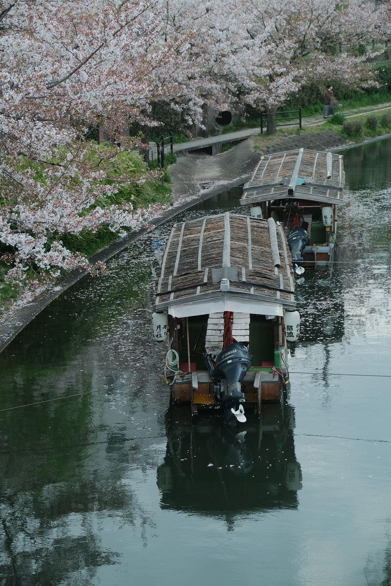 京都 桜 2021_f0021869_22123103.jpg