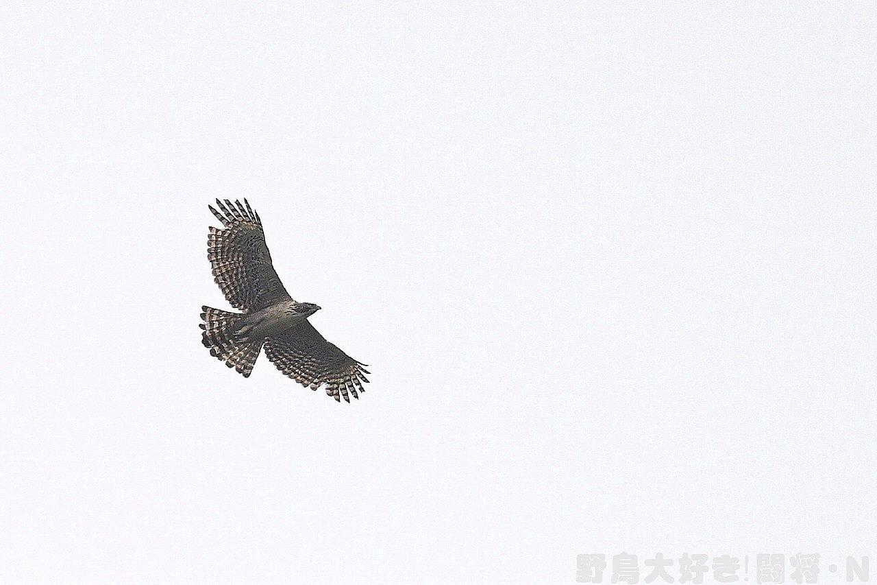 曇り空の中で_f0059882_05363984.jpg