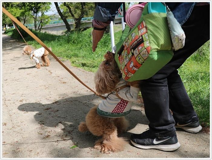 久しぶりの全員集合!!楽しいお散歩できました(v´∀'*) イエーイ♪_b0175688_22454103.jpg