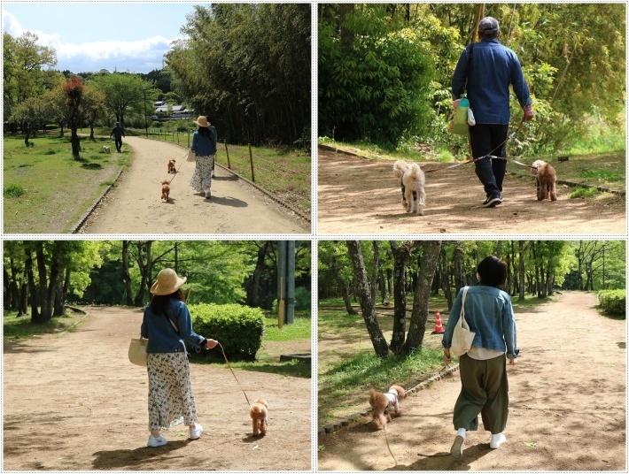 久しぶりの全員集合!!楽しいお散歩できました(v´∀'*) イエーイ♪_b0175688_22454794.jpg