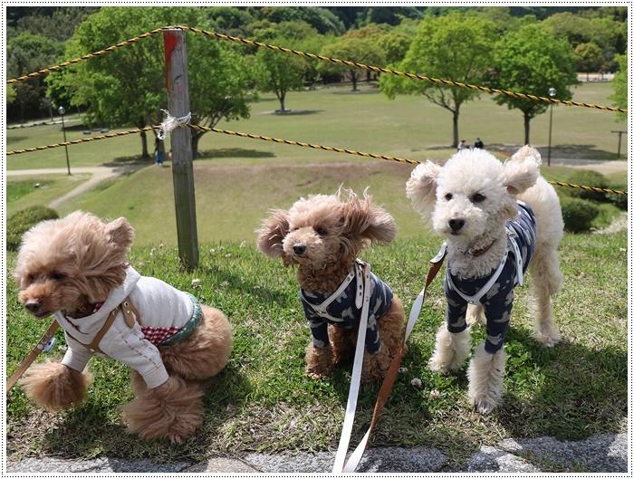 久しぶりの全員集合!!楽しいお散歩できました(v´∀'*) イエーイ♪_b0175688_22570904.jpg