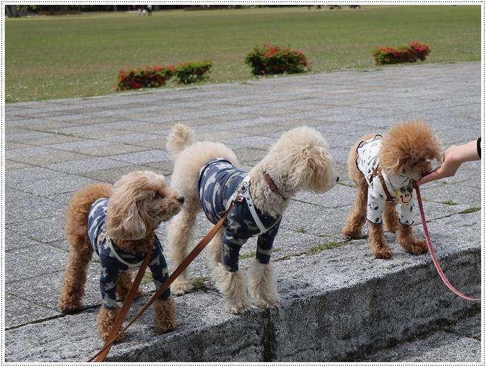 久しぶりの全員集合!!楽しいお散歩できました(v´∀'*) イエーイ♪_b0175688_22585935.jpg
