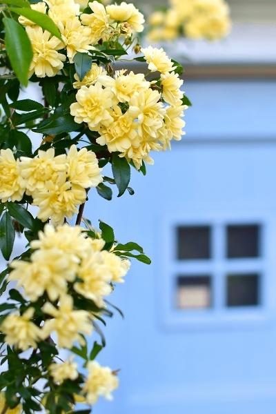 4月の庭 2021_d0025294_15371306.jpg