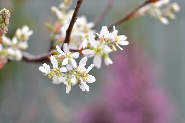 4月の庭 2021_d0025294_15375745.jpg