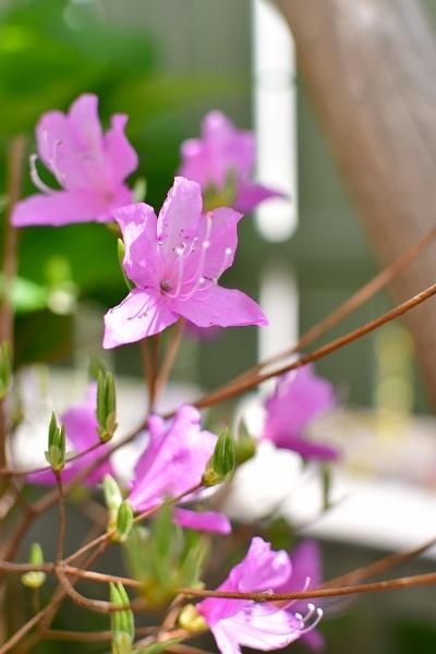 4月の庭 2021_d0025294_15392104.jpg