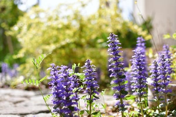 4月の庭 2021_d0025294_15405037.jpg