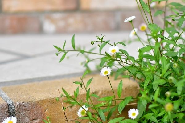 4月の庭 2021_d0025294_15411593.jpg
